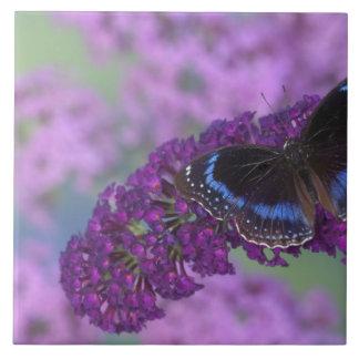 Sammamish Washington Photograph of Butterfly on 12 Tiles