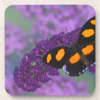 Sammamish Washington Photograph of Butterfly on 13 Coaster