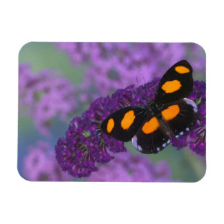 Sammamish Washington Photograph of Butterfly on 13 Magnet