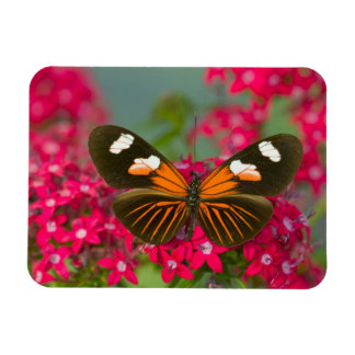 Sammamish Washington Photograph of Butterfly on 14 Magnet