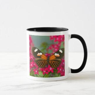 Sammamish Washington Photograph of Butterfly on 14 Mug