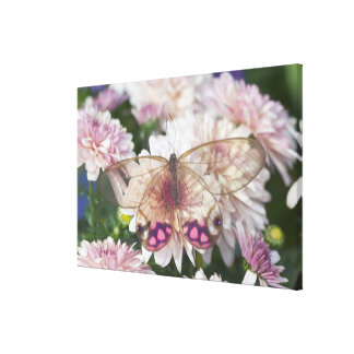 Sammamish Washington Photograph of Butterfly on 15 Stretched Canvas Print