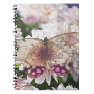 Sammamish Washington Photograph of Butterfly on 15 Notebook