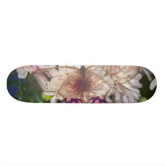Sammamish Washington Photograph of Butterfly on 15 Skateboard