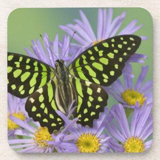Sammamish Washington Photograph of Butterfly on 16 Coaster