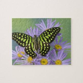 Sammamish Washington Photograph of Butterfly on 16 Jigsaw Puzzle