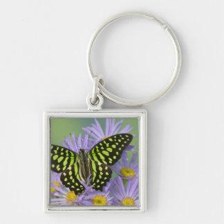 Sammamish Washington Photograph of Butterfly on 16 Keychain