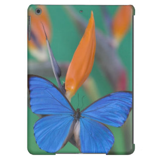 Sammamish Washington Photograph of Butterfly on 2 iPad Air Cases