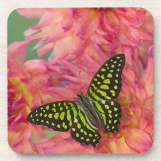 Sammamish Washington Photograph of Butterfly on 3 Drink Coasters
