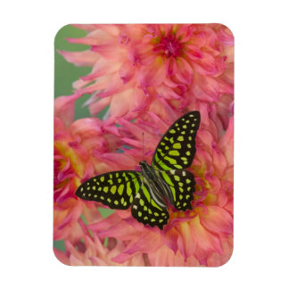 Sammamish Washington Photograph of Butterfly on 3 Magnet