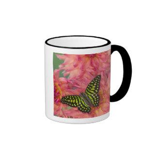 Sammamish Washington Photograph of Butterfly on 3 Ringer Coffee Mug
