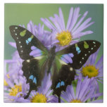 "Sammamish Washington Photograph of Butterfly on 4 Ceramic Tile<br><div class=""desc"">COPYRIGHT Darrell Gulin / DanitaDelimont.com 
