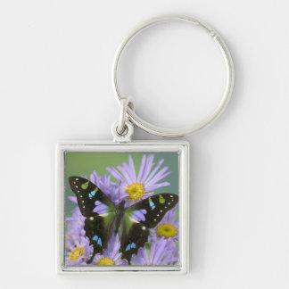 Sammamish Washington Photograph of Butterfly on 4 Keychain