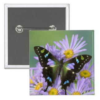 Sammamish Washington Photograph of Butterfly on 4 Pinback Button