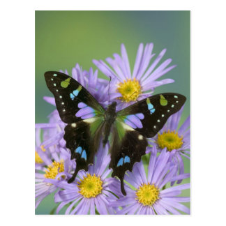 Sammamish Washington Photograph of Butterfly on 4 Postcard