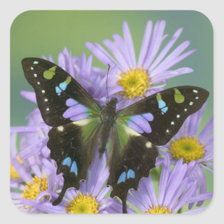 Sammamish Washington Photograph of Butterfly on 4 Square Sticker