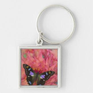 Sammamish Washington Photograph of Butterfly on 5 Keychain