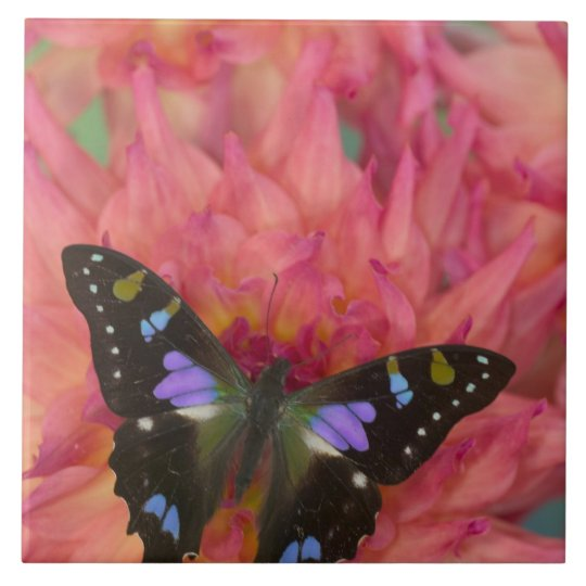 Sammamish Washington Photograph of Butterfly on 5 Tile