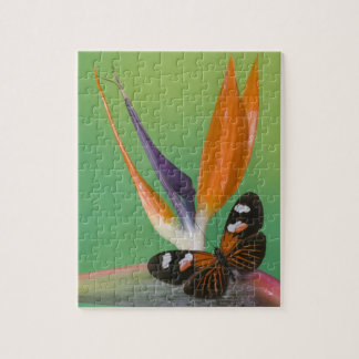 Sammamish Washington Photograph of Butterfly on 6 Jigsaw Puzzle