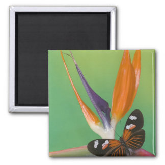 Sammamish Washington Photograph of Butterfly on 6 Magnet