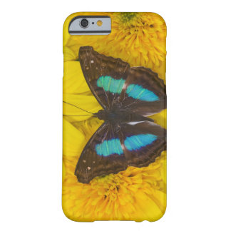 Sammamish Washington Photograph of Butterfly on 7 Barely There iPhone 6 Case
