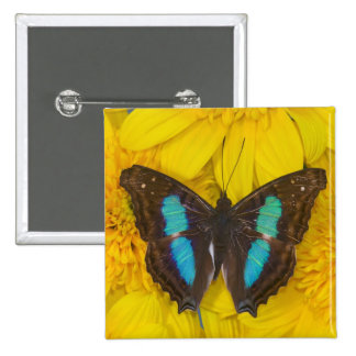 Sammamish Washington Photograph of Butterfly on 7 2 Inch Square Button