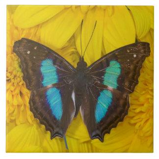 Sammamish Washington Photograph of Butterfly on 7 Ceramic Tile