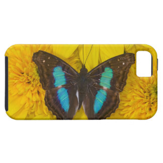 Sammamish Washington Photograph of Butterfly on 7 iPhone SE/5/5s Case
