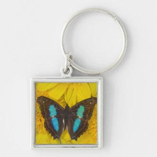 Sammamish Washington Photograph of Butterfly on 7 Keychain
