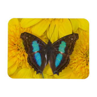 Sammamish Washington Photograph of Butterfly on 7 Magnet