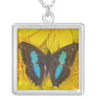 Sammamish Washington Photograph of Butterfly on 7 Silver Plated Necklace