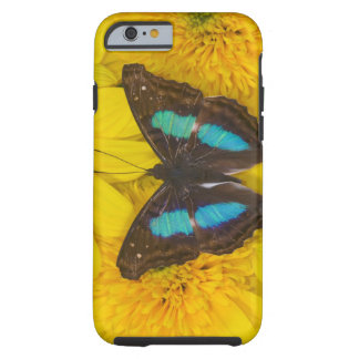 Sammamish Washington Photograph of Butterfly on 7 Tough iPhone 6 Case