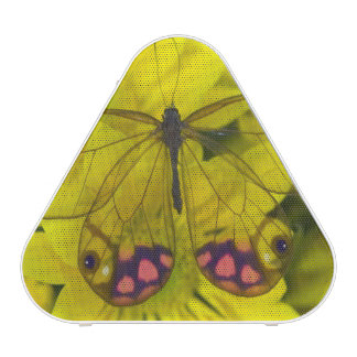 Sammamish Washington Photograph of Butterfly on 8 Bluetooth Speaker