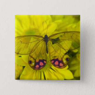 Sammamish Washington Photograph of Butterfly on 8 Button