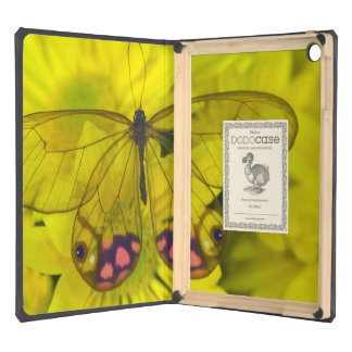 Sammamish Washington Photograph of Butterfly on 8 iPad Air Cases