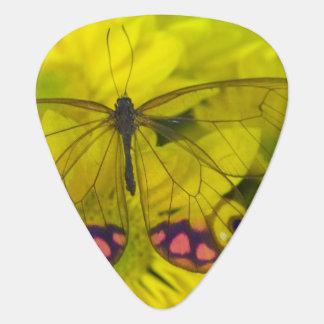 Sammamish Washington Photograph of Butterfly on 8 Guitar Pick