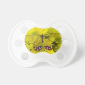 Sammamish Washington Photograph of Butterfly on 8 Pacifier