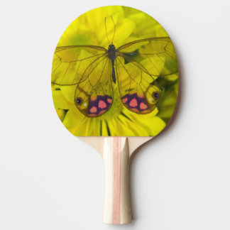 Sammamish Washington Photograph of Butterfly on 8 Ping-Pong Paddle
