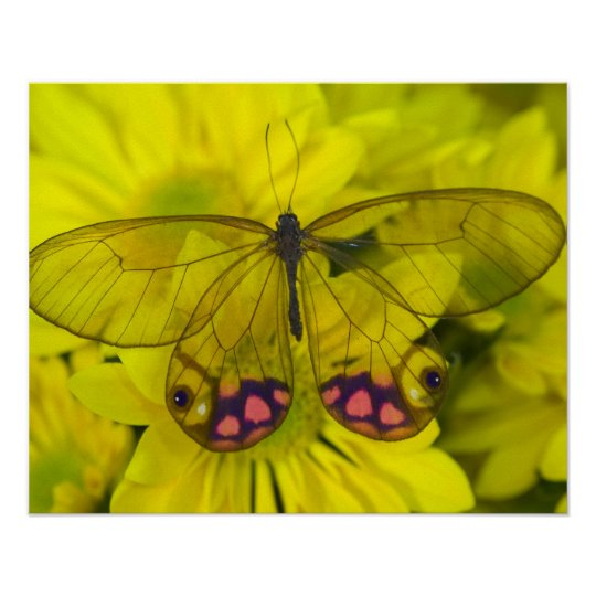 Sammamish Washington Photograph of Butterfly on 8 Poster