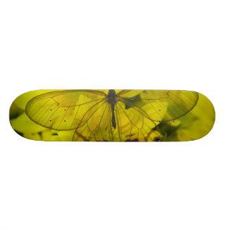 Sammamish Washington Photograph of Butterfly on 8 Skateboard
