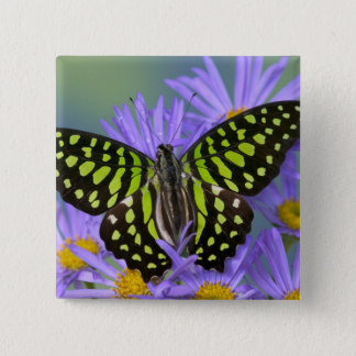 Sammamish Washington Photograph of Butterfly on 9 Pinback Button