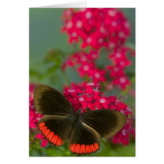 Sammamish Washington Photograph of Butterfly on Card