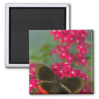 Sammamish Washington Photograph of Butterfly on Magnet