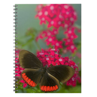 Sammamish Washington Photograph of Butterfly on Notebook