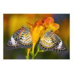 Sammamish, Washington. Tropical Butterflies 10 Photograph