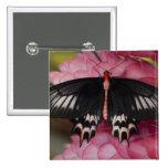 Sammamish, Washington. Tropical Butterflies 10 Pinback Button