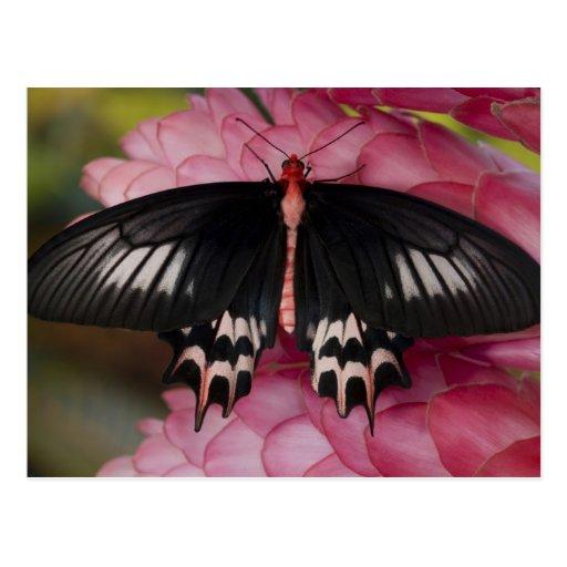 Sammamish, Washington. Tropical Butterflies 10 Postcard