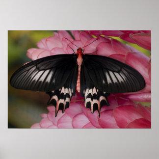Sammamish, Washington. Tropical Butterflies 10 Poster
