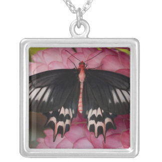 Sammamish, Washington. Tropical Butterflies 10 Silver Plated Necklace