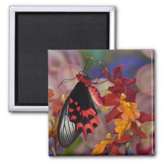 Sammamish, Washington. Tropical Butterflies 12 Fridge Magnets